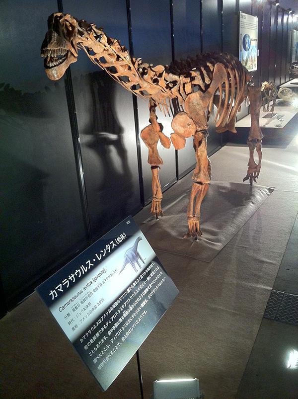 カマラサウルス・レンタス