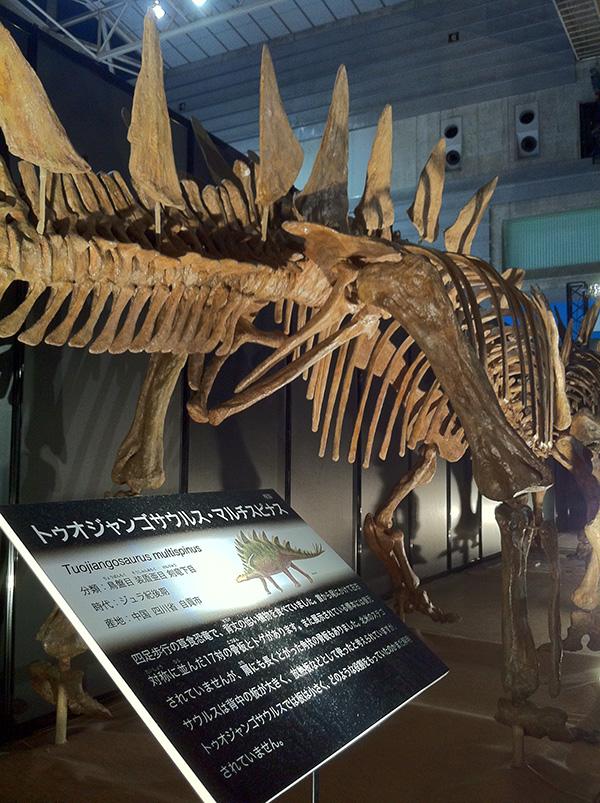 トゥオジャンゴサウルス・マルチスピナス