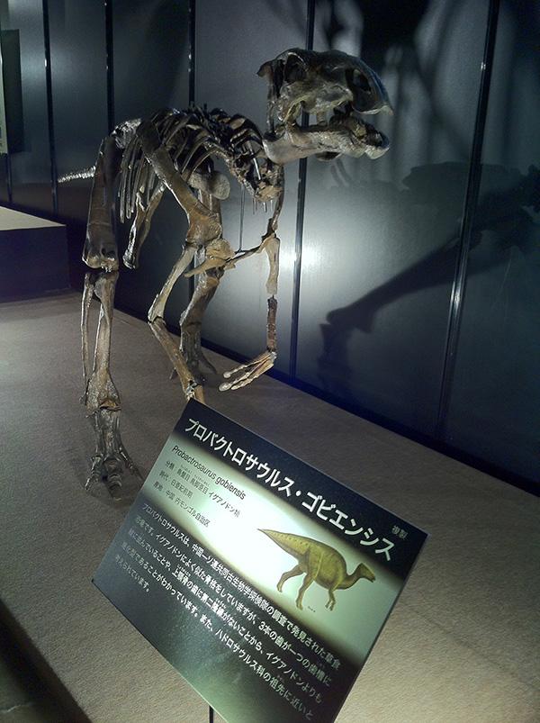 プロバクトロサウルス・ゴビエンシス