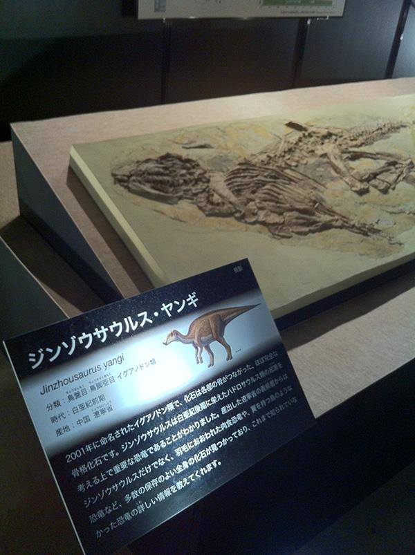 ジンゾウサウルス・ヤンギ