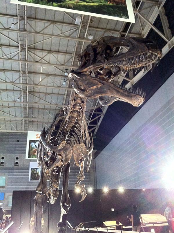 アクロカントサウルス・アトケンシス