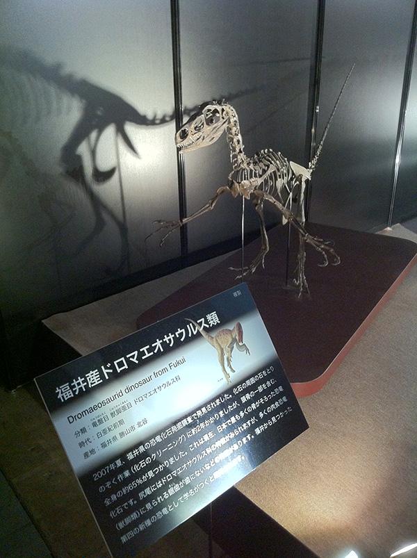 福井産ドロマエオサウルス類