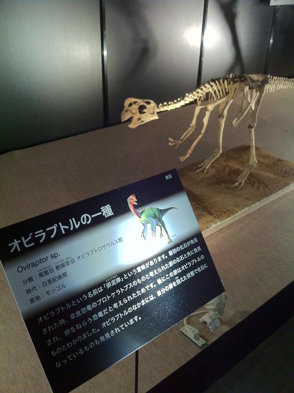 オビラプトルの一種