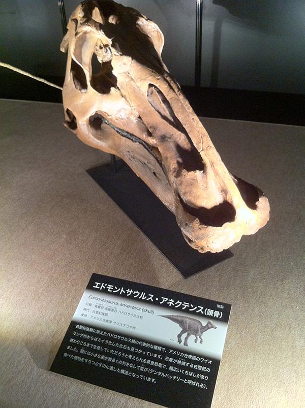 エドモントサウルス・アネクテンス