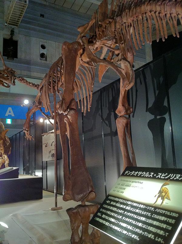 チンタオサウルス・スピノリヌス