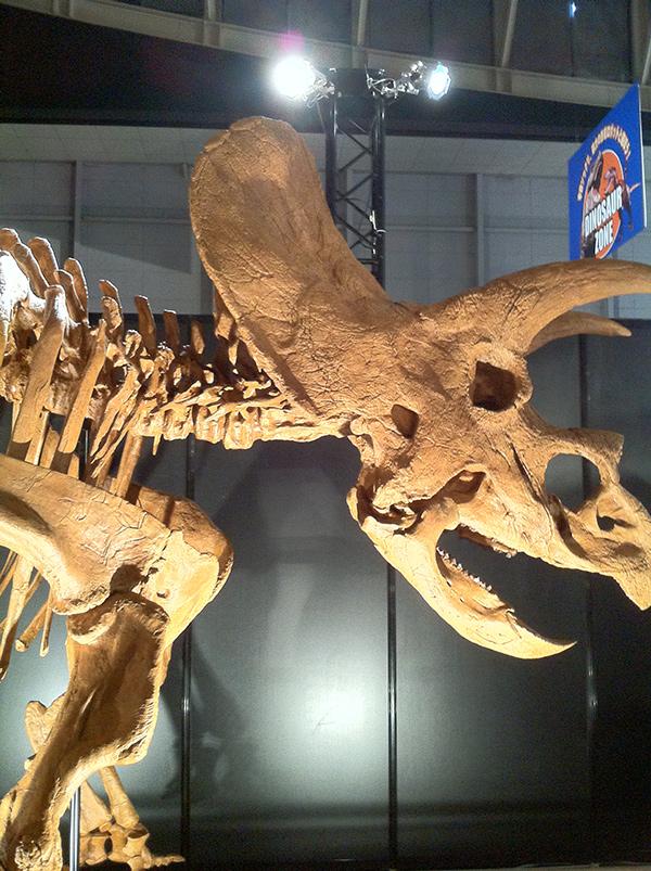 トリケラトプス・ホリダス
