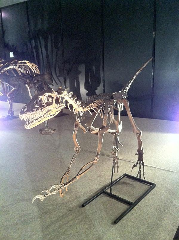 ドロマエオサウルス・アルバーテンシス